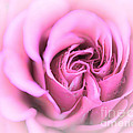 Pinkness by Edmund Nagele