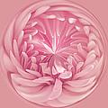Pinkness by Kim Hojnacki
