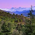 Pinsapar At Sierra Nevada by Guido Montanes Castillo