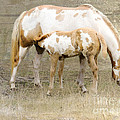 Pinto Mare And Filly by Betty LaRue