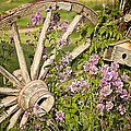 Pioneer Blossoms - Casper Wyoming by Diane Mintle