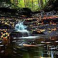 Pipestem Falls by Melissa Petrey