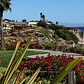 Pismo Beach Landscape by Judy Vincent