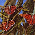 Pismo Monarchs by Laurie Morgan