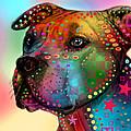 Pit Bull by Mark Ashkenazi