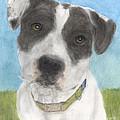 Pitbull Dog Portrait Canine Animal Cathy Peek by Cathy Peek
