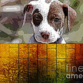 Pitbull Puppy by Marvin Blaine