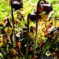 Pitcher Plant Abstraction by Barbara Griffin