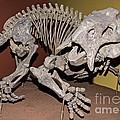 Placerias Fossil by Millard H. Sharp