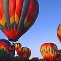 Plainville Hot Air Balloon Fesitval by Barbara McDevitt
