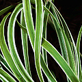 Plant Abstract by Gary Slawsky