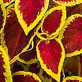 Plant Design by Wayne Vedvig