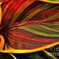 Plant Leaf by Kathleen Struckle