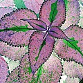 Plant Pattern - Photopower 1211 by Pamela Critchlow