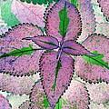 Plant Pattern - Photopower 1212 by Pamela Critchlow