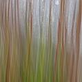 Plant Stem Sweep by Dreamland Media