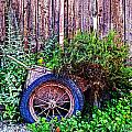 Planted Wheel by Holly Blunkall