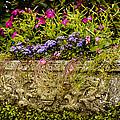 Planter by Mark Llewellyn