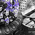 Planter With Pansies And Bench by Elena Elisseeva