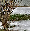 Plantgrasscomp 2009 by Glenn Bautista