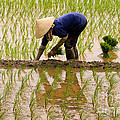 Planting Rice by J L Woody Wooden