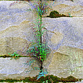 Plants In The Brick Wall by Duane McCullough