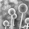 Plants In The Rain by Natalie Kinnear