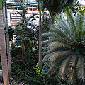Plants - Us Botanic Garden - 011311 by DC Photographer