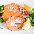 Plate With Shrimps  by Antonio Scarpi