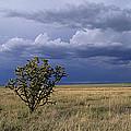 Plateau Cholla New Mexico by Buddy Mays