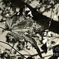 Platinum Leaves 5 by Jeff Breiman