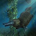 Platypus by Daniel Eskridge