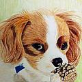 Playful Ginger by Zelma Hensel