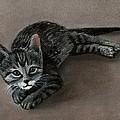 Playful Kitten by Anastasiya Malakhova