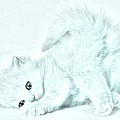 Playful Kitty by J D Owen