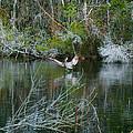 Playful Pelican by Mechala Matthews
