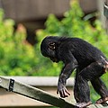 Playful Young Monkey by Dan Sproul