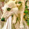 Playing Dog Portrait by Odon Czintos