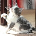 Playing Kitten by Michelle Powell
