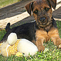 Playmates - Puppy With Toy by Gill Billington