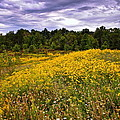 Pleasant Meadow Foreboding Sky by Frozen in Time Fine Art Photography