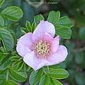 Pleasing Pink by Sonali Gangane