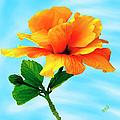 Pleasure - Yellow Double Hibiscus by Ben and Raisa Gertsberg