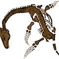 Pleisiosaurus, Mesozic Marine Reptile by Science Source