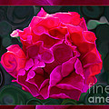 Plentiful Supplies Of Pink Peony Petals Abstract by Omaste Witkowski