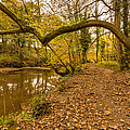 Plessey Woods Riverside Footpath by David Head