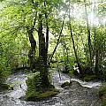Plitvice Lakes by Travel Pics