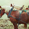 Plow Horses by Alice Gipson