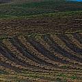 Plowed by Gene Garnace