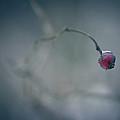 Plucked A Heart by Shane Holsclaw